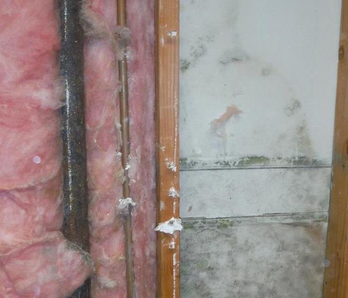 Maricopa Commercial Mold Damage