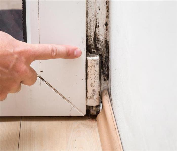 Mold Remediation Shut Down Mold Growth In Your Maricopa Home