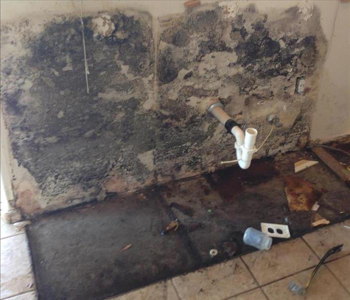 Mold Remediation Water Losses in Your Maricopa Home Can Allow for Mold Growth
